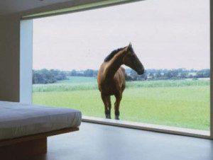 Feng Shui Window Horse